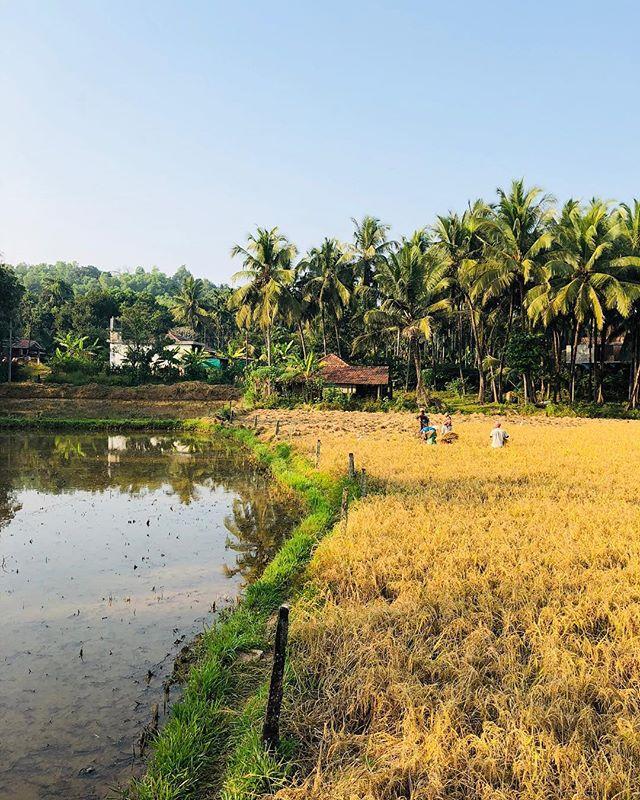 Mangalore vibes  #travel #mangalore #nature #mangalorediaries #landscapephotography #landscape #farm #rurallife #phone #india