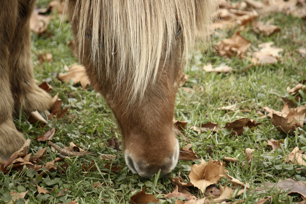 Photo of a horse at Hudson Valley Malt