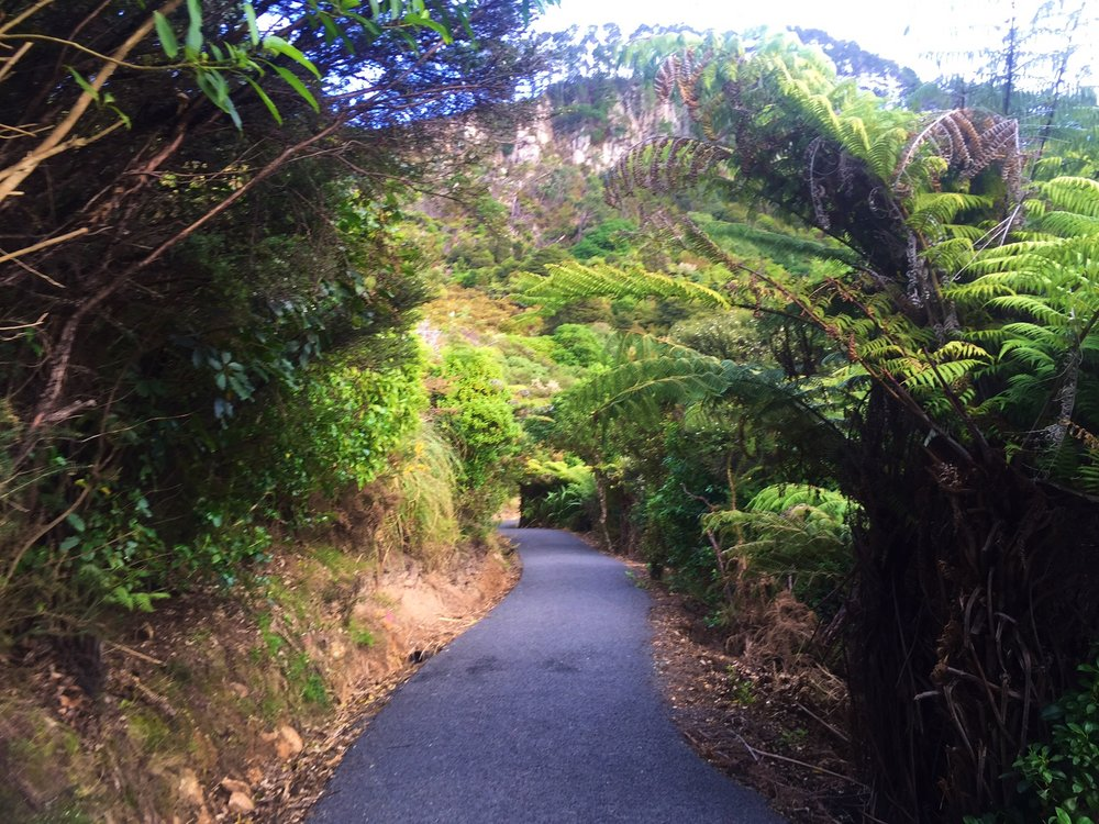 "This is the ""hike"" (ahem, walk) down to Cathedral Cove"