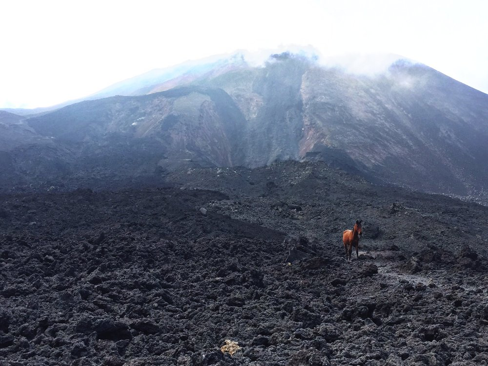 Here's a majestic AF horse frolicking along the volcanic ash during my hike!