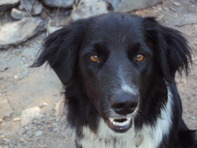 Meet Mick... - Hello I'm Mick, I am 5 years old. My mom tells me that I am Border Collie, but I'm not certain... I'm pretty sure I am a human. I hang out with humans all day because I usually go to work with mom. I am always happy to see you, so let mom or Barb know if you want to make an appointment..... To See ME!!