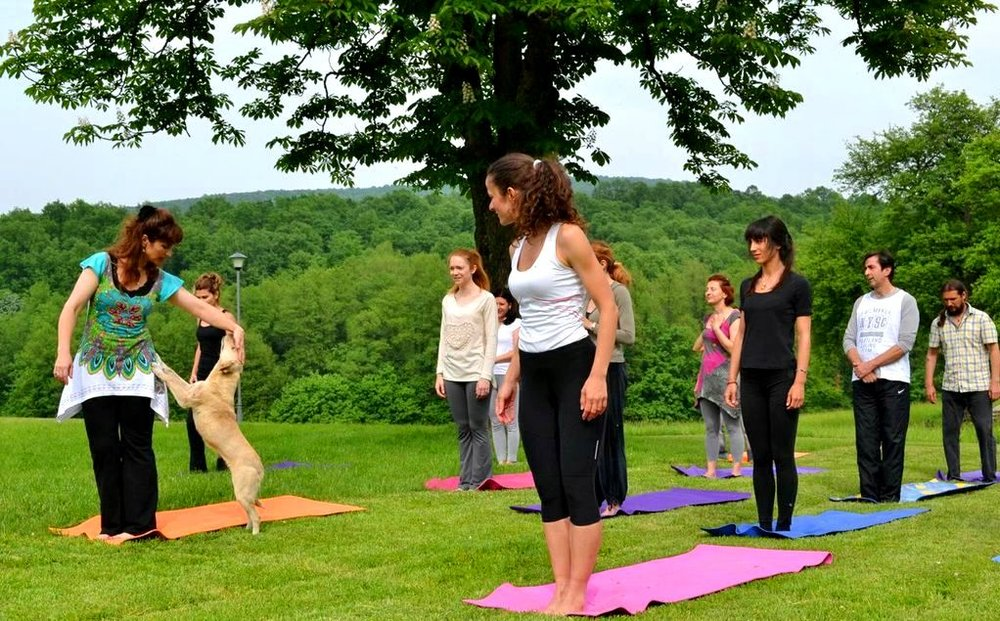 Doggy insists to be caressed - interrupting our outdoor Yoga session, Andrevlje 2013.jpg