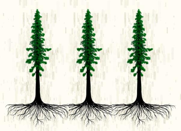 redwood root binding.png