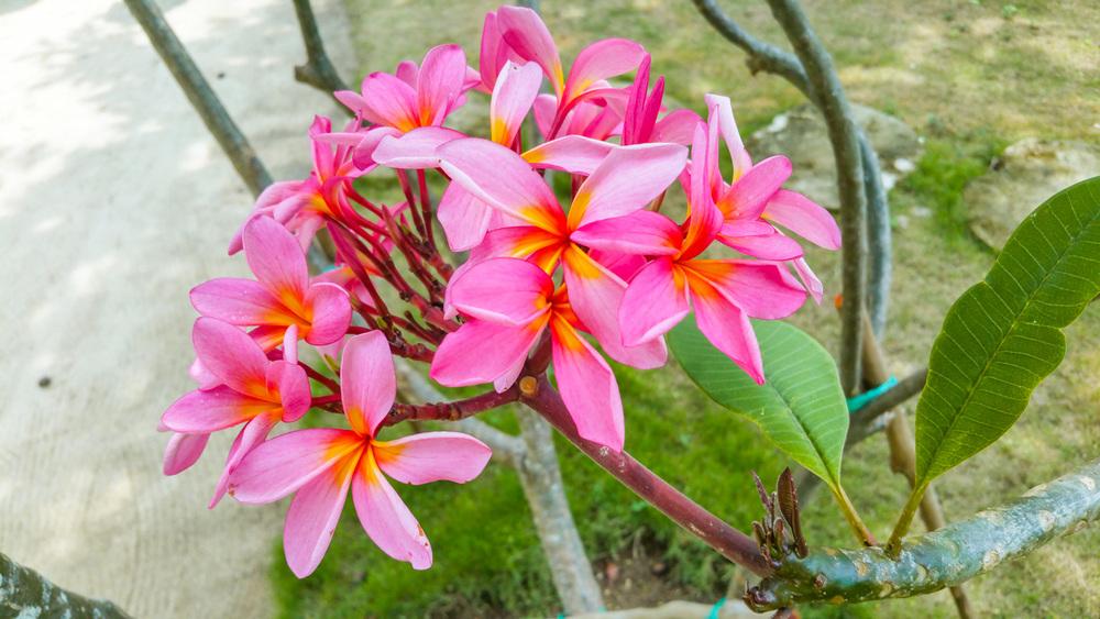 09_Random_Flower_01.jpg