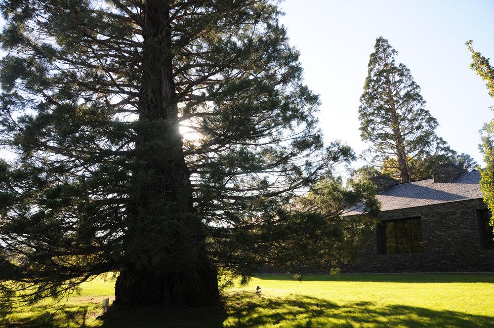 aeland-paisajismo-tree.JPG