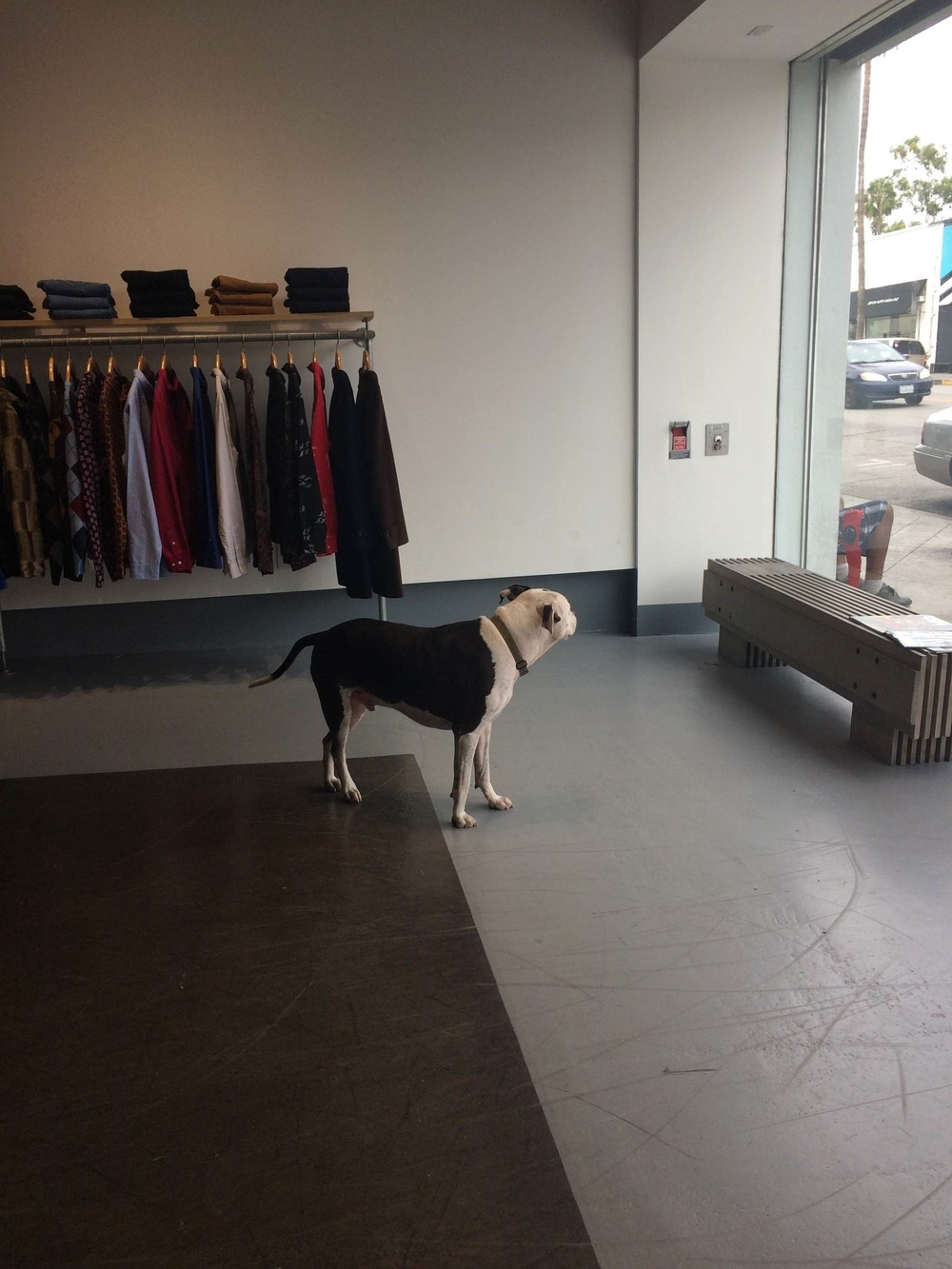 In Fairfax, we experienced the first taste of LA dog culture Dogs are allowed everywhere! Here's a shopdog hanging out
