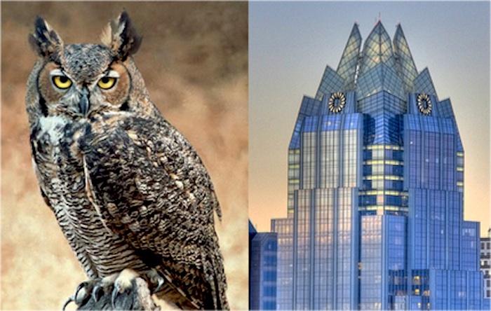 owl-frost-bank.jpg