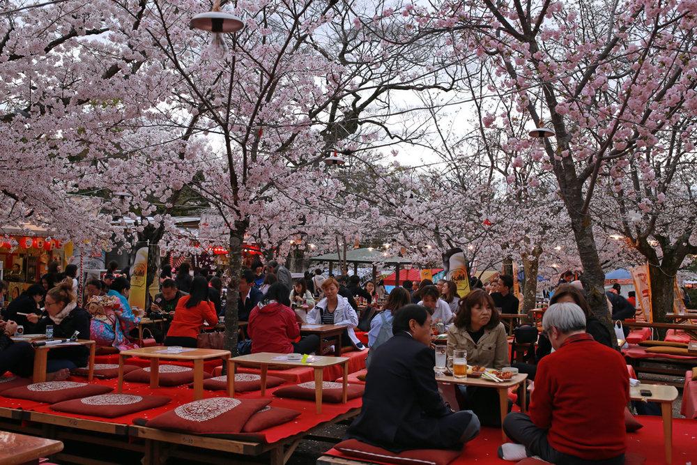 Sakura picnic Maruyama-Park.jpg
