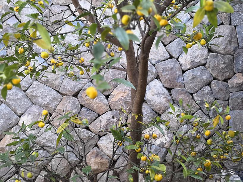 fruit trees sugimoto.jpg