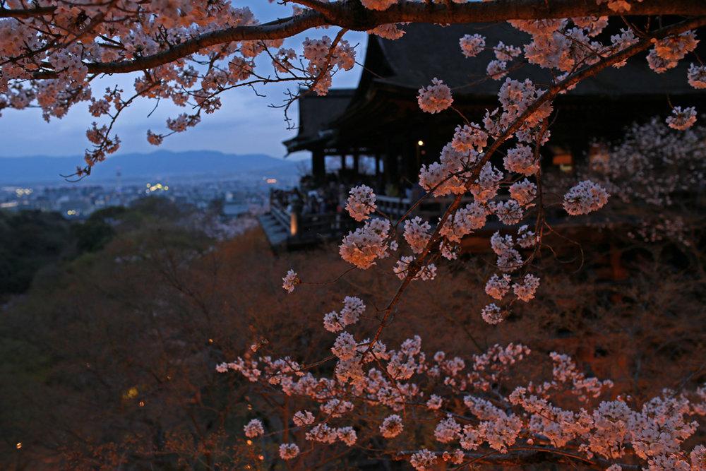 Kyoto night sakura Kiyomizudera-Temple-2.jpg