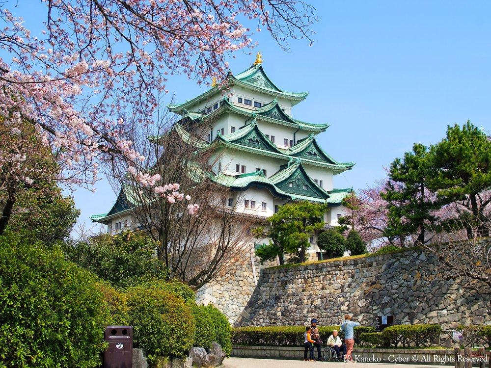桜と名古屋城(Nagoya_Castle_with_Cherry_blossoms)_31_Mar,_2016_-_panoramio.jpg