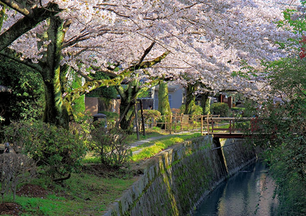philosophers-path-kyoto-blossoms-590.ngsversion.1513909350522.adapt.1900.1.jpg