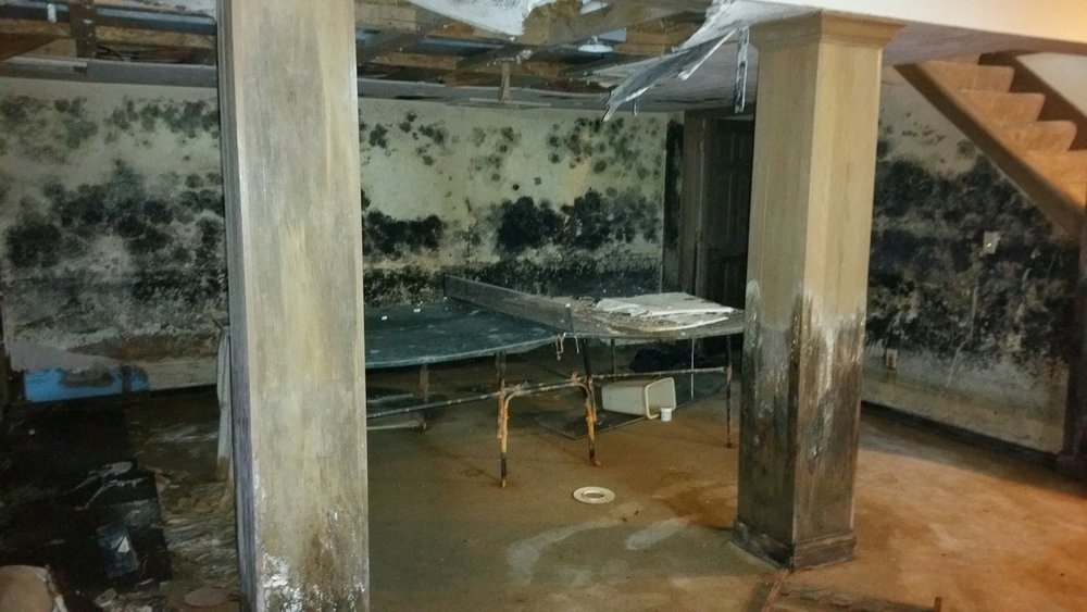 Mold-Remediation.jpg