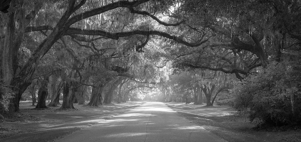 Live-Oak-Black-and-White-copy.jpg