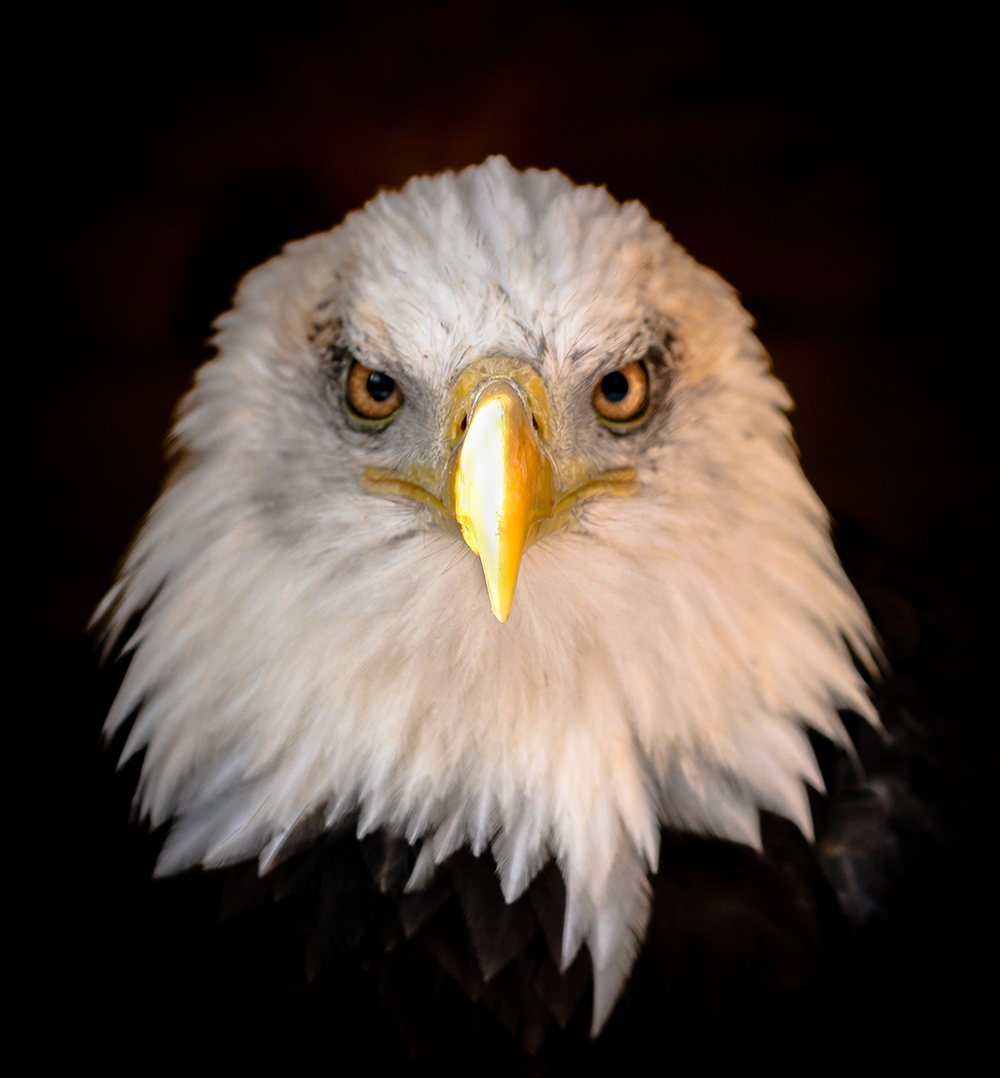 Eagle-HS-copy.jpg
