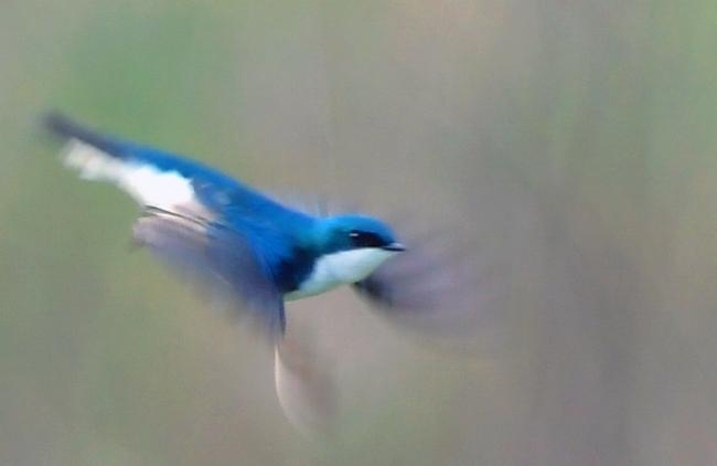 Blurred Motion.jpg