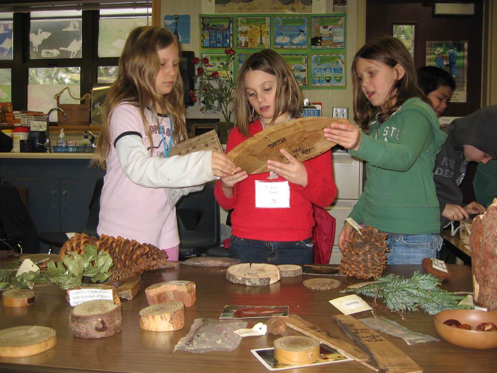 Girls Examining tree rounds.JPG