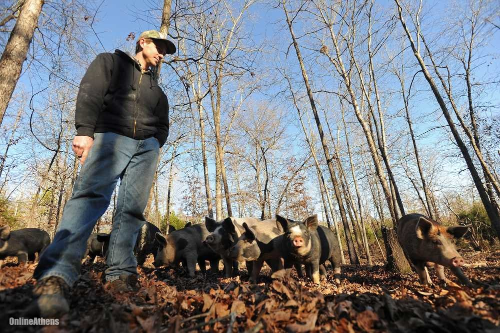 Benji Anderson visits with some of his pigs at Anderson Farm in Oglethorpe County, Ga. (Photo credit: Richard Hamm/Staff at Online Athens   We love Benji Anderson and his humanely raised pigs. He has 48 acres and 90 pigs, and he raises them as friends in the field, because why wouldn't you? You'll often find them on our menu, proudly.   Our friend Andre Gallent wrote a great story about Benji this week for the Athens Banner Herald. Check it out at:     http://onlineathens.com/local-news/2014-01-11/oglethorpe-farmer-has-chops-produce-humanely-raised-tasty-pigs