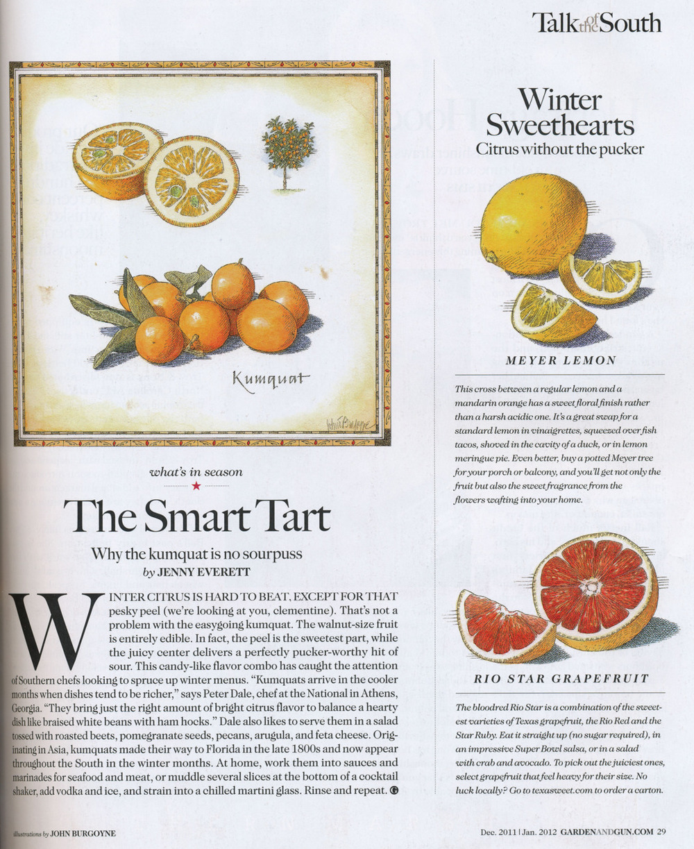 "Chef Dale gets a word in about kumquats as a welcome winter citrus in this month's   Garden and Gun  , Dec 2011/Jan 2012     { ""Kumquats arrive in the cooler months when dishes tend to be richer,"" says Peter Dale, chef at The National in Athens, Georgia. ""They bring just the right amount of bright citrus flavor to balance a hearty dish like braised white beans with ham hocks."" Dale also likes to serve them in a salad tossed with roasted beets, pomegranate seeds, pecans, arugula, and feta cheese. }    Look out for this beet and kumquat salad on our menu, as well as kumquats served with fish and other hearty winter dishes in the upcoming weeks."