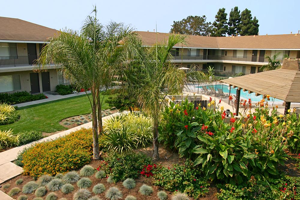 ZFREEDMAN_Ventura_queen palms 2c.jpg