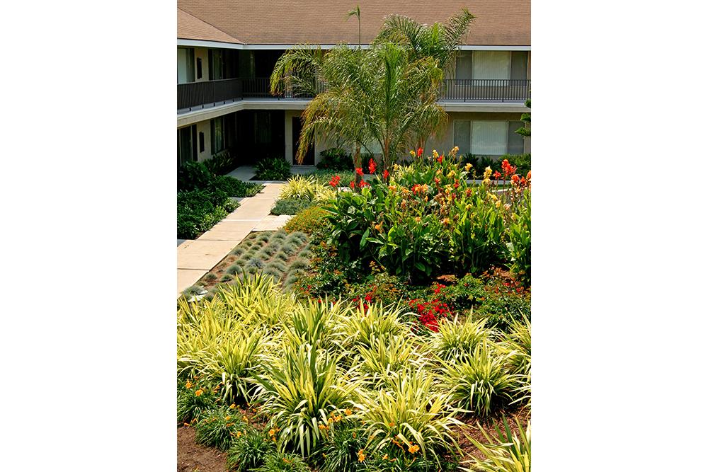 ZFREEDMAN_Ventura_tropical hillc.jpg