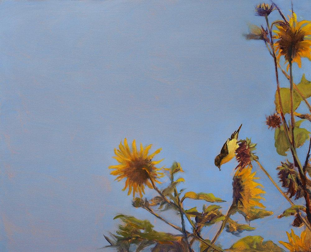"""Blue Sky Finch  Oil on linen 24"""" x 30"""""""