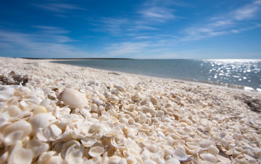 (AUSTRALIA) Shell Beach, Australia.jpg