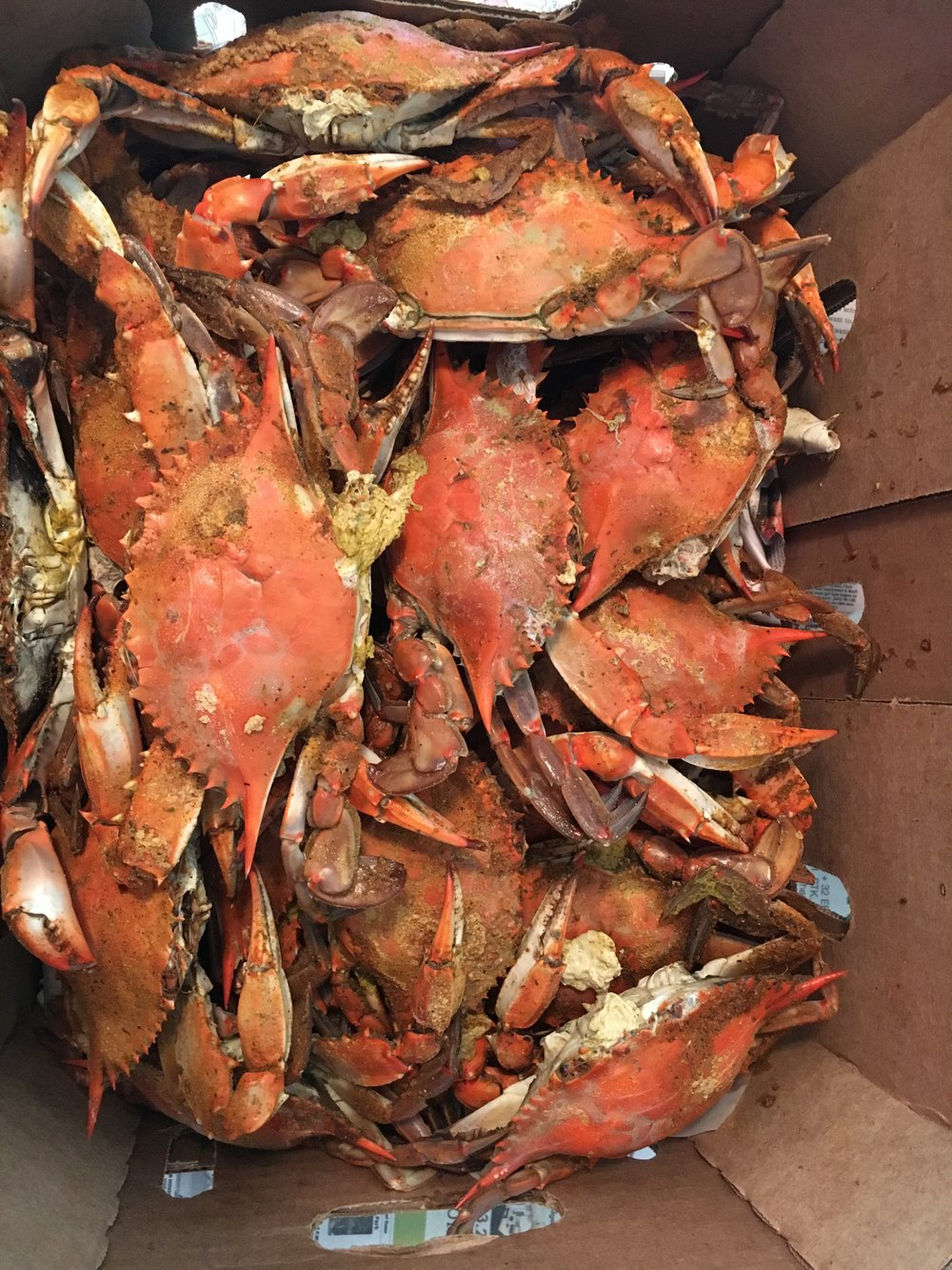 3.) I miss Maryland crabs. This is from my trip home in March. HEAVEN.