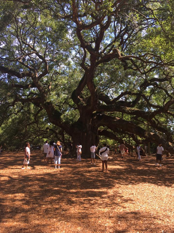 the cast of porgy and bess and the 400 yr old oak tree.jpg