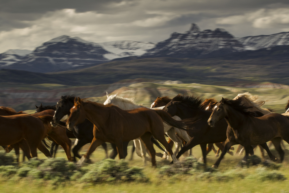 horses on turtle ranch dubois wyoming unreal