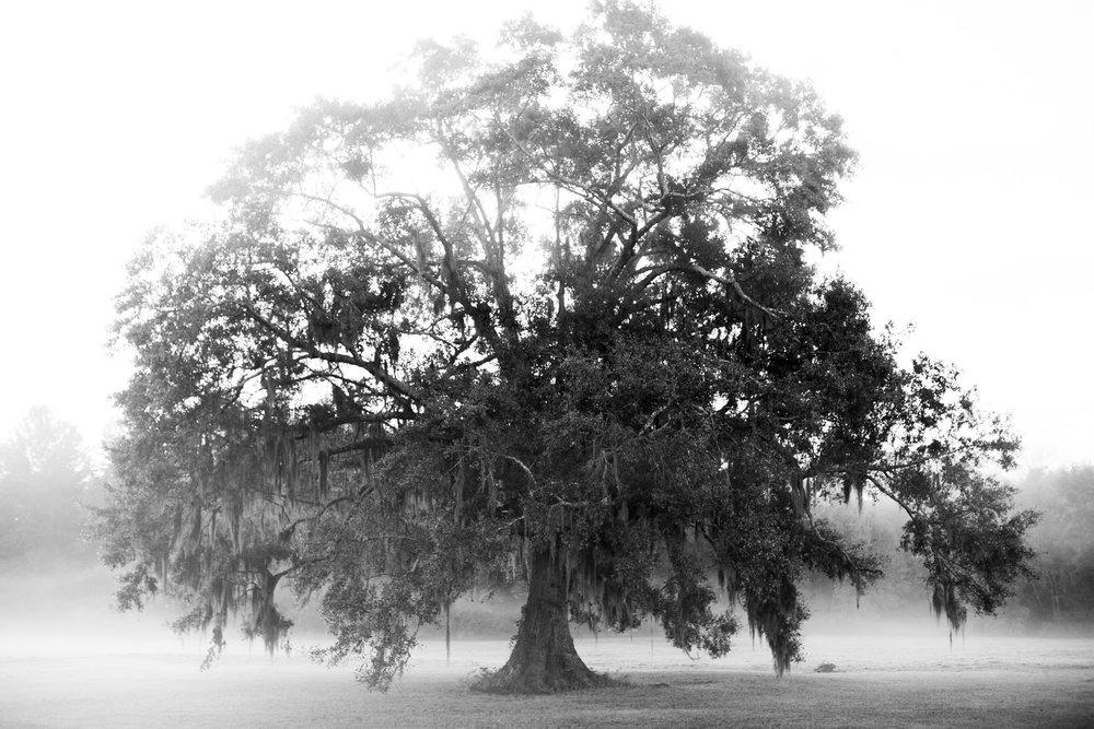 Marshtree.JPG