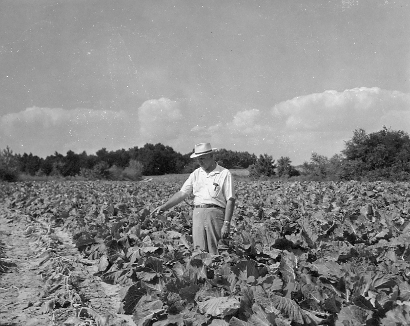Walter in Collard Field0001.jpg