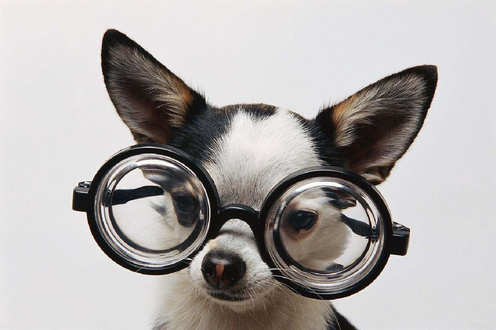 (image source: http://www.dancingdogblog.com/2013/10/fido-google-glass-for-service-dogs-serious-pet-tech/dog-w-glasses/)