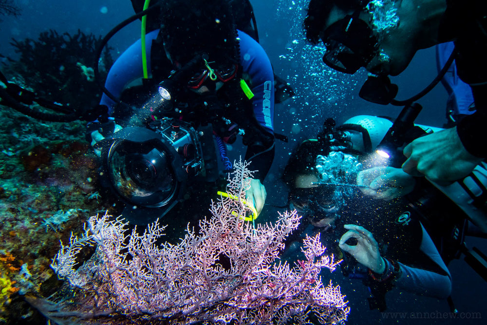 Chewie, Grace, and Matt all crowded over a sea fan looking for a Bargibanti pygmy sea horse.