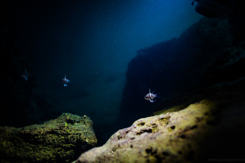 There are in fact little fishes in the caves...