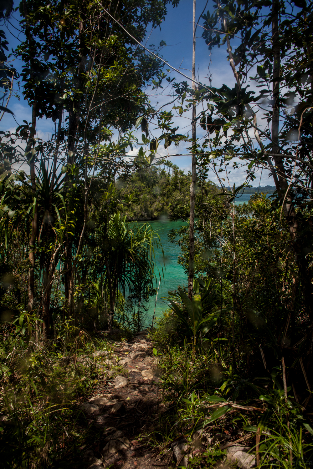 Just a short hike through the jungle!