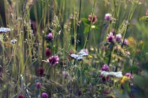 nature-field-flowers-grass-3.jpg
