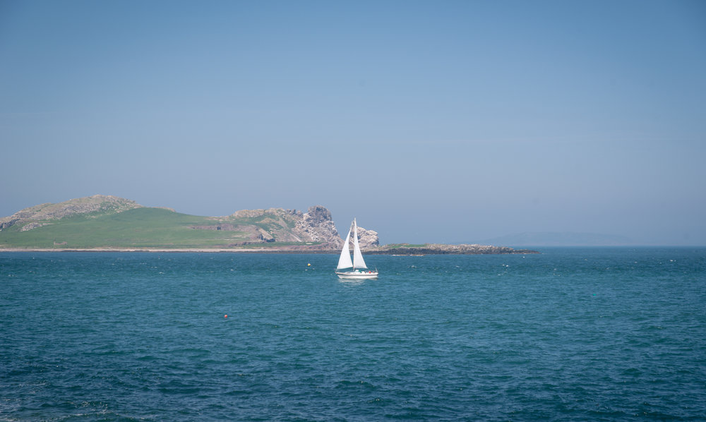 It was a great day for sailing. At least I think so, I've never sailed before so don't take my word on it.