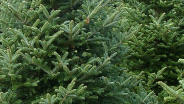 After the holidays WPOA will pick up members' used Christmas trees at no cost.  Details .