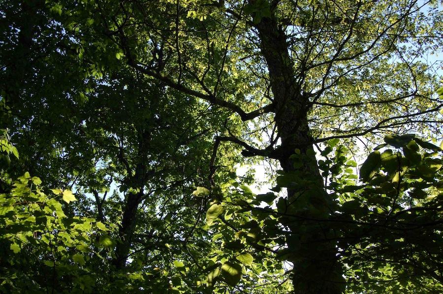 wintergreen trees-cb.jpg