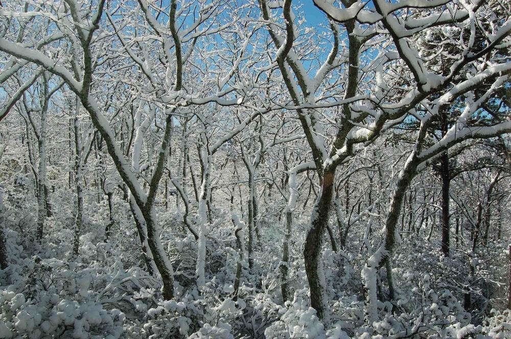 snow-at-laurel-aerie-011813a.jpg