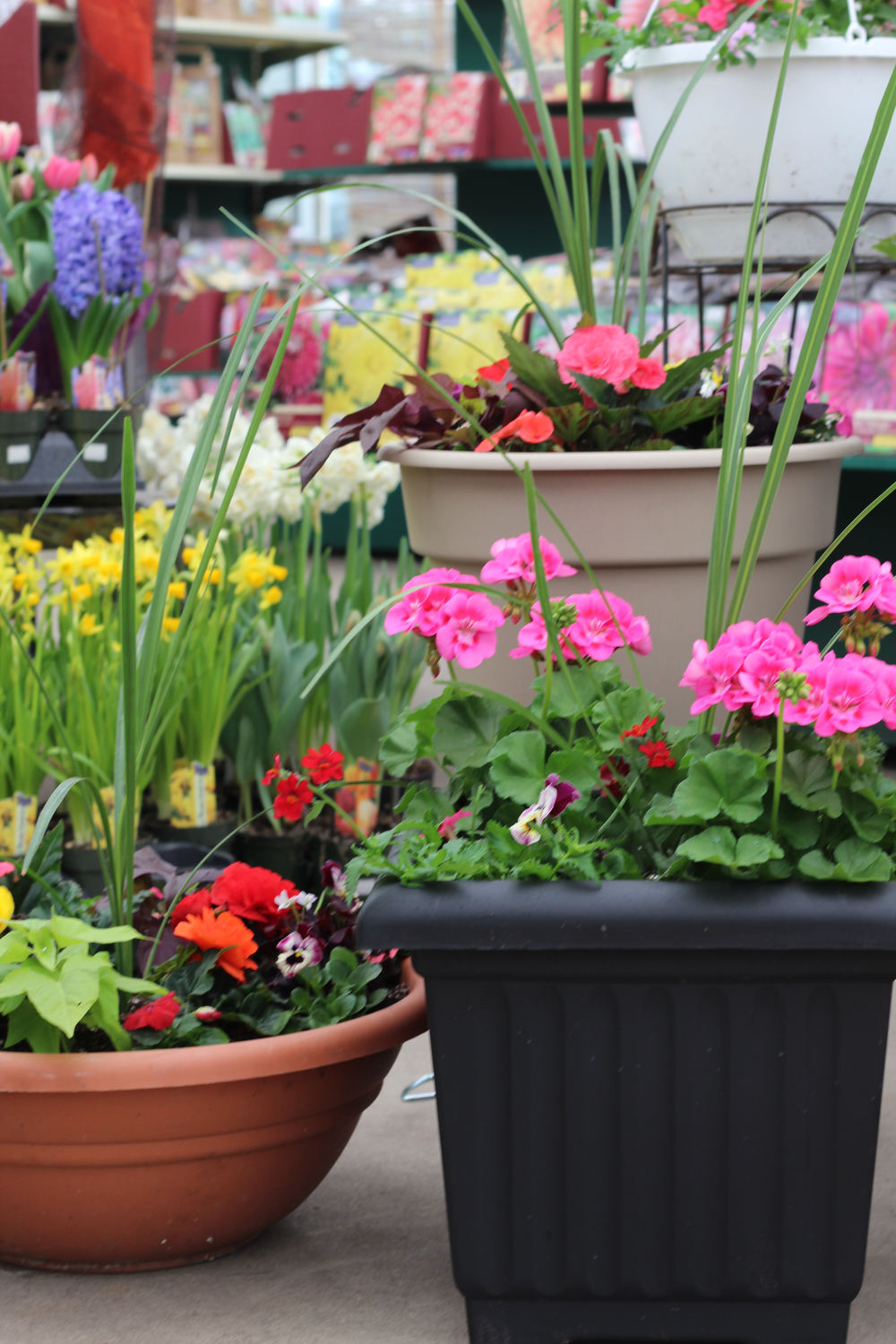 Container gardening offers a very versatile and low-maintenance option for gardening enthusiasts.