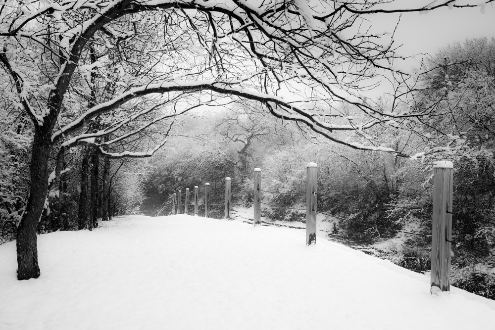 Coppell Snow 2010_4457-Edit.jpg