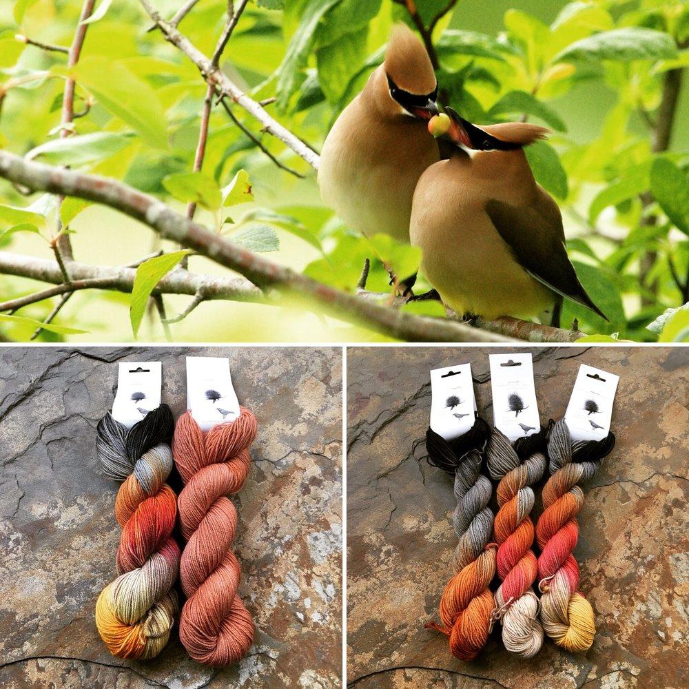 October Ornithology Collage NEW.JPG