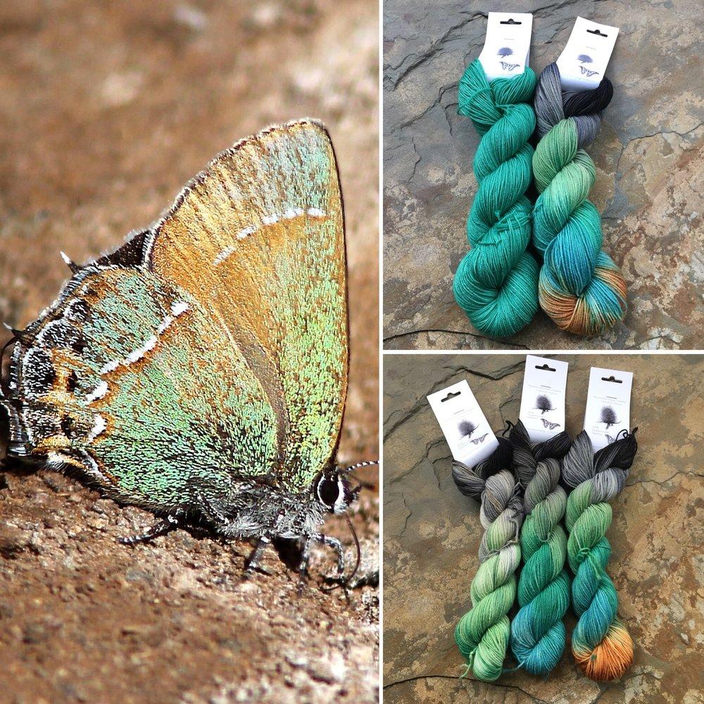 October Entomology Collage.jpg