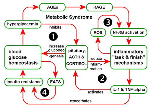 "The flow chart showing  the ""Vicious Cycle"" of Metabolic syndrome."