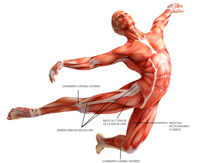 What Is Fascia And Why Is It So Important Faith Mountain Wellness