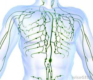 Thoracic Lymphatic System