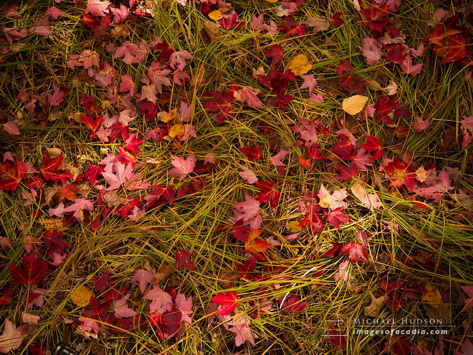 Fallen Leaves at the edge of the Great Meadow