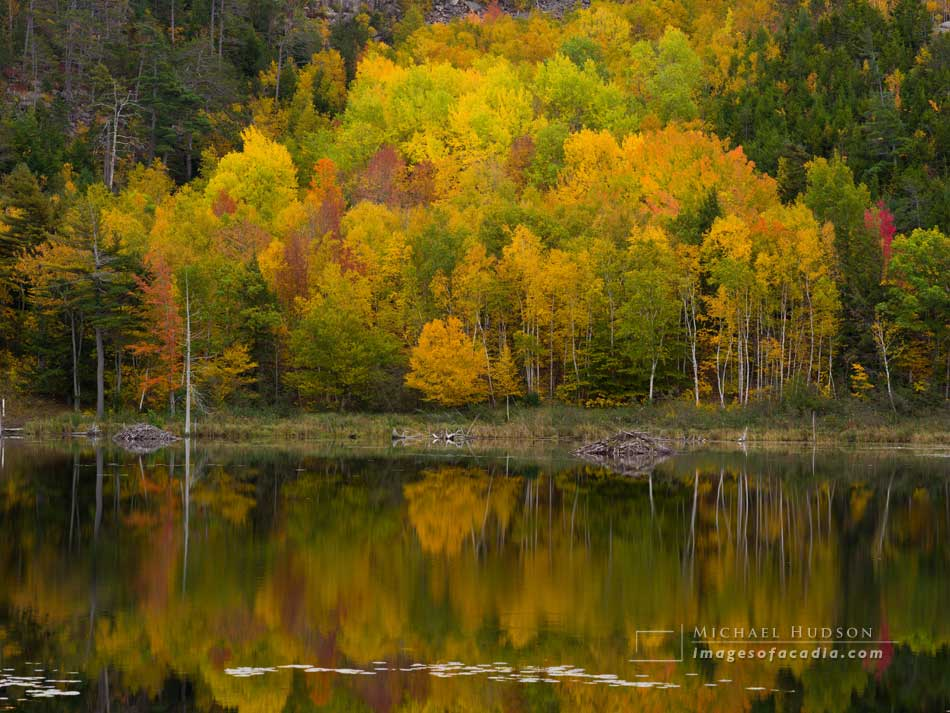 Autumn foliage reflected in Beaver Dam Pond, Acadia National Par